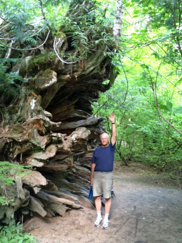 Bob and the big fallen tree