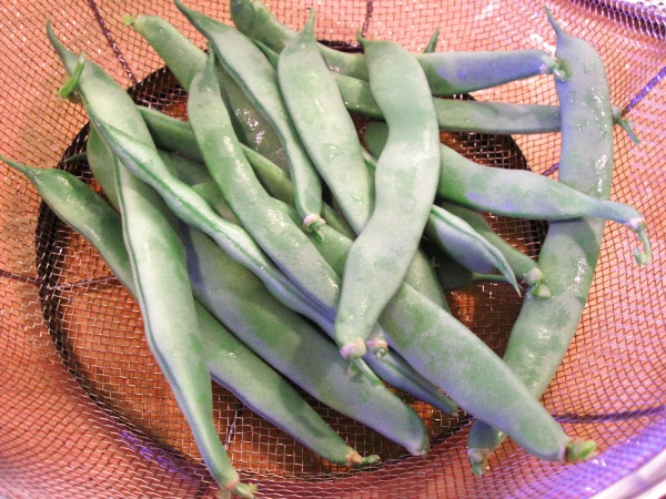 Homegrown green beans