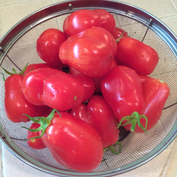 Homegrown plum tomatoes
