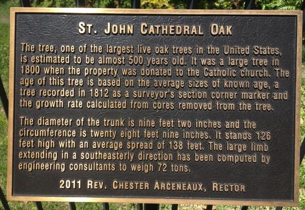 About the St. John's oak.jpg