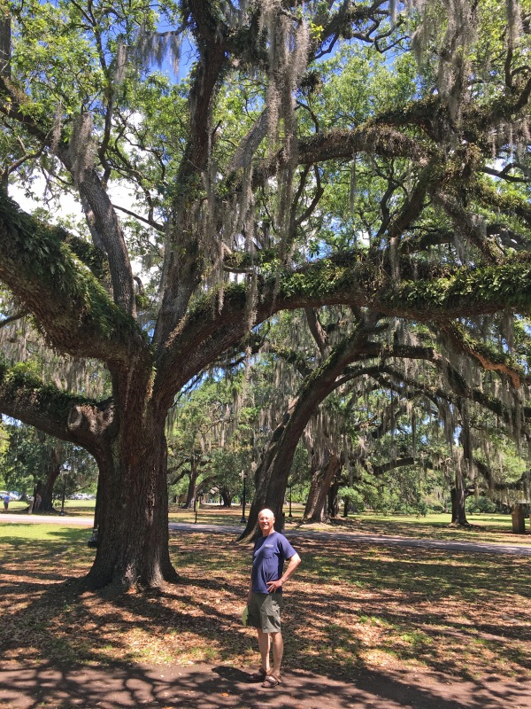 Audubon park, oak tree with Spanish moss
